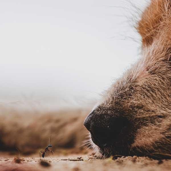 närbild hund ser en myra